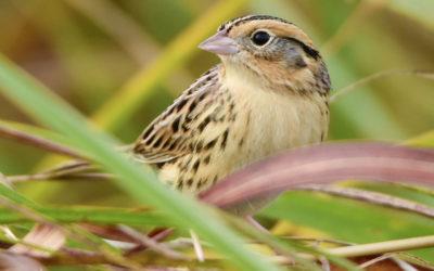 Sparrow Paradise